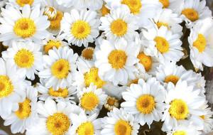 fiori di back
